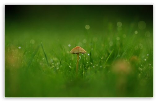 Field Mushroom HD wallpaper for Wide 16:10 5:3 Widescreen WHXGA WQXGA WUXGA WXGA WGA ; HD 16:9 High Definition WQHD QWXGA 1080p 900p 720p QHD nHD ; Standard 4:3 5:4 3:2 Fullscreen UXGA XGA SVGA QSXGA SXGA DVGA HVGA HQVGA devices ( Apple PowerBook G4 iPhone 4 3G 3GS iPod Touch ) ; Tablet 1:1 ; iPad 1/2/Mini ; Mobile 4:3 5:3 3:2 16:9 5:4 - UXGA XGA SVGA WGA DVGA HVGA HQVGA devices ( Apple PowerBook G4 iPhone 4 3G 3GS iPod Touch ) WQHD QWXGA 1080p 900p 720p QHD nHD QSXGA SXGA ; Dual 16:10 5:3 16:9 4:3 5:4 WHXGA WQXGA WUXGA WXGA WGA WQHD QWXGA 1080p 900p 720p QHD nHD UXGA XGA SVGA QSXGA SXGA ;