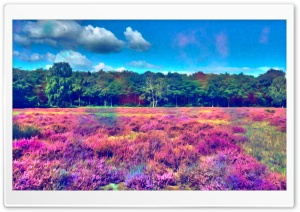Field of Color HD Wide Wallpaper for Widescreen