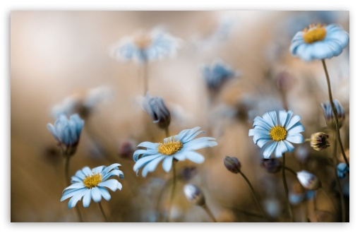 Field Of Daisies Macro ❤ 4K UHD Wallpaper for Wide 16:10 5:3 Widescreen WHXGA WQXGA WUXGA WXGA WGA ; 4K UHD 16:9 Ultra High Definition 2160p 1440p 1080p 900p 720p ; Standard 4:3 5:4 3:2 Fullscreen UXGA XGA SVGA QSXGA SXGA DVGA HVGA HQVGA ( Apple PowerBook G4 iPhone 4 3G 3GS iPod Touch ) ; Tablet 1:1 ; iPad 1/2/Mini ; Mobile 4:3 5:3 3:2 16:9 5:4 - UXGA XGA SVGA WGA DVGA HVGA HQVGA ( Apple PowerBook G4 iPhone 4 3G 3GS iPod Touch ) 2160p 1440p 1080p 900p 720p QSXGA SXGA ;