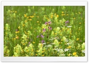 Field Of Flowers 1 HD Wide Wallpaper for Widescreen