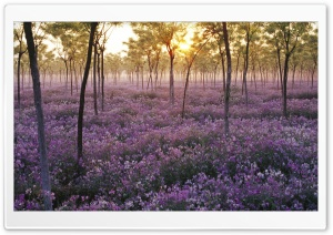 Field Of Flowers HD Wide Wallpaper for Widescreen