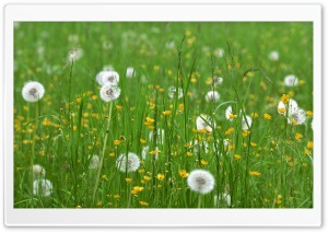 Field Of Flowers Spring HD Wide Wallpaper for Widescreen