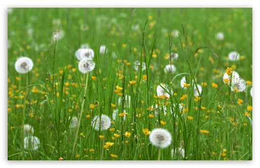 Field Of Flowers Spring HD wallpaper for Standard 4:3 5:4 Fullscreen UXGA XGA SVGA QSXGA SXGA ; Wide 16:10 5:3 Widescreen WHXGA WQXGA WUXGA WXGA WGA ; HD 16:9 High Definition WQHD QWXGA 1080p 900p 720p QHD nHD ; Other 3:2 DVGA HVGA HQVGA devices ( Apple PowerBook G4 iPhone 4 3G 3GS iPod Touch ) ; Mobile VGA WVGA iPhone iPad PSP Phone - VGA QVGA Smartphone ( PocketPC GPS iPod Zune BlackBerry HTC Samsung LG Nokia Eten Asus ) WVGA WQVGA Smartphone ( HTC Samsung Sony Ericsson LG Vertu MIO ) HVGA Smartphone ( Apple iPhone iPod BlackBerry HTC Samsung Nokia ) Sony PSP Zune HD Zen ; Tablet 2 ; Dual 4:3 5:4 16:10 5:3 16:9 UXGA XGA SVGA QSXGA SXGA WHXGA WQXGA WUXGA WXGA WGA WQHD QWXGA 1080p 900p 720p QHD nHD ;