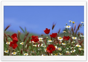 Field Of Flowers Summer HD Wide Wallpaper for Widescreen