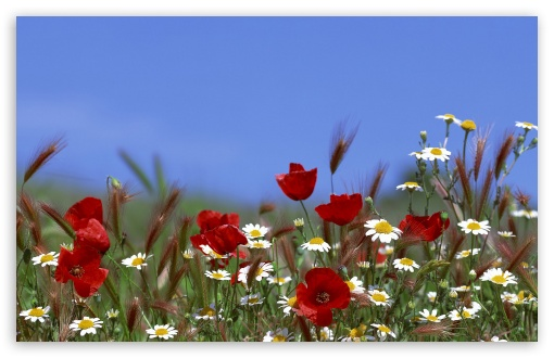 Field Of Flowers Summer ❤ 4K UHD Wallpaper for Wide 16:10 5:3 Widescreen WHXGA WQXGA WUXGA WXGA WGA ; 4K UHD 16:9 Ultra High Definition 2160p 1440p 1080p 900p 720p ; Standard 4:3 5:4 3:2 Fullscreen UXGA XGA SVGA QSXGA SXGA DVGA HVGA HQVGA ( Apple PowerBook G4 iPhone 4 3G 3GS iPod Touch ) ; Tablet 1:1 ; iPad 1/2/Mini ; Mobile 4:3 5:3 3:2 16:9 5:4 - UXGA XGA SVGA WGA DVGA HVGA HQVGA ( Apple PowerBook G4 iPhone 4 3G 3GS iPod Touch ) 2160p 1440p 1080p 900p 720p QSXGA SXGA ; Dual 16:10 5:3 16:9 4:3 5:4 WHXGA WQXGA WUXGA WXGA WGA 2160p 1440p 1080p 900p 720p UXGA XGA SVGA QSXGA SXGA ;