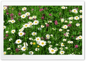 Field Of Flowers Summer 1 HD Wide Wallpaper for Widescreen