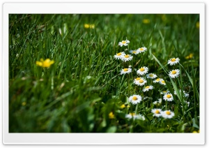 Field Of Grass And Flowers HD Wide Wallpaper for Widescreen