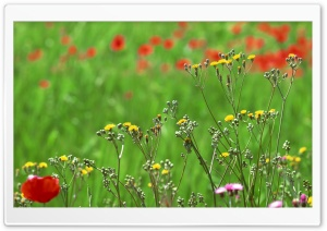 Field Of Spring Flowers HD Wide Wallpaper for Widescreen