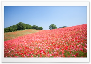 Field Of Wildflowers HD Wide Wallpaper for Widescreen