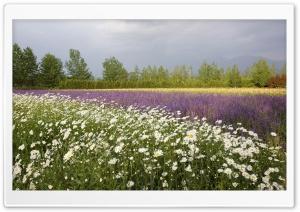 Field Of Wildflowers 25 Ultra HD Wallpaper for 4K UHD Widescreen desktop, tablet & smartphone