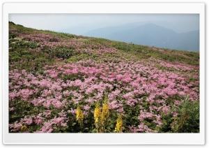 Field Of Wildflowers 27 Ultra HD Wallpaper for 4K UHD Widescreen desktop, tablet & smartphone