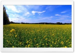 Field Of Wildflowers 28 Ultra HD Wallpaper for 4K UHD Widescreen desktop, tablet & smartphone