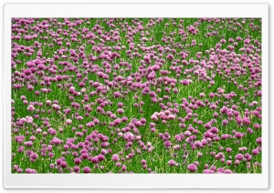 Field Of Wildflowers 29 HD Wide Wallpaper for Widescreen