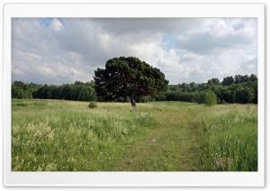 Field Path HD Wide Wallpaper for 4K UHD Widescreen desktop & smartphone
