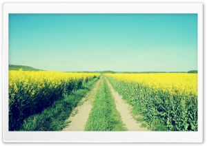 Field Road Ultra HD Wallpaper for 4K UHD Widescreen desktop, tablet & smartphone