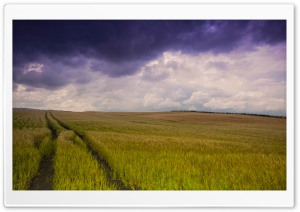 Field Tracks HD Wide Wallpaper for Widescreen