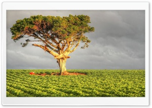 Field Tree HD Wide Wallpaper for Widescreen