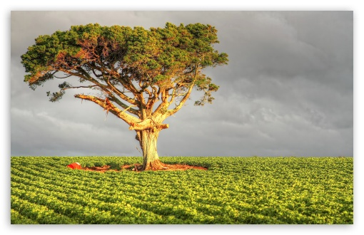 Field Tree ❤ 4K UHD Wallpaper for Wide 16:10 5:3 Widescreen WHXGA WQXGA WUXGA WXGA WGA ; 4K UHD 16:9 Ultra High Definition 2160p 1440p 1080p 900p 720p ; UHD 16:9 2160p 1440p 1080p 900p 720p ; Standard 4:3 5:4 3:2 Fullscreen UXGA XGA SVGA QSXGA SXGA DVGA HVGA HQVGA ( Apple PowerBook G4 iPhone 4 3G 3GS iPod Touch ) ; Tablet 1:1 ; iPad 1/2/Mini ; Mobile 4:3 5:3 3:2 16:9 5:4 - UXGA XGA SVGA WGA DVGA HVGA HQVGA ( Apple PowerBook G4 iPhone 4 3G 3GS iPod Touch ) 2160p 1440p 1080p 900p 720p QSXGA SXGA ;