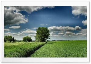 Field Tree Cloud Blue Sky HD Wide Wallpaper for 4K UHD Widescreen desktop & smartphone