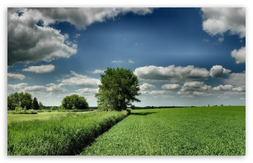 Field Tree Cloud Blue Sky ❤ 4K UHD Wallpaper for Wide 16:10 5:3 Widescreen WHXGA WQXGA WUXGA WXGA WGA ; 4K UHD 16:9 Ultra High Definition 2160p 1440p 1080p 900p 720p ; Standard 4:3 5:4 3:2 Fullscreen UXGA XGA SVGA QSXGA SXGA DVGA HVGA HQVGA ( Apple PowerBook G4 iPhone 4 3G 3GS iPod Touch ) ; Tablet 1:1 ; iPad 1/2/Mini ; Mobile 4:3 5:3 3:2 16:9 5:4 - UXGA XGA SVGA WGA DVGA HVGA HQVGA ( Apple PowerBook G4 iPhone 4 3G 3GS iPod Touch ) 2160p 1440p 1080p 900p 720p QSXGA SXGA ;
