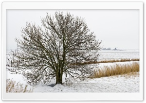 Field Tree, Winter HD Wide Wallpaper for Widescreen
