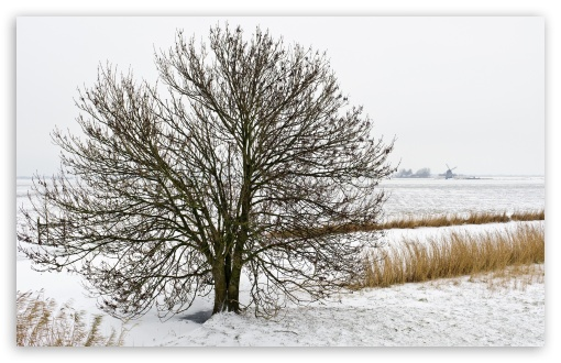 Field Tree, Winter ❤ 4K UHD Wallpaper for Wide 16:10 5:3 Widescreen WHXGA WQXGA WUXGA WXGA WGA ; 4K UHD 16:9 Ultra High Definition 2160p 1440p 1080p 900p 720p ; Standard 4:3 5:4 3:2 Fullscreen UXGA XGA SVGA QSXGA SXGA DVGA HVGA HQVGA ( Apple PowerBook G4 iPhone 4 3G 3GS iPod Touch ) ; Tablet 1:1 ; iPad 1/2/Mini ; Mobile 4:3 5:3 3:2 16:9 5:4 - UXGA XGA SVGA WGA DVGA HVGA HQVGA ( Apple PowerBook G4 iPhone 4 3G 3GS iPod Touch ) 2160p 1440p 1080p 900p 720p QSXGA SXGA ; Dual 5:4 QSXGA SXGA ;