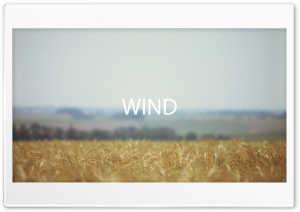 Field Wind HD Wide Wallpaper for Widescreen