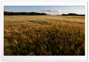 Fields HD Wide Wallpaper for Widescreen