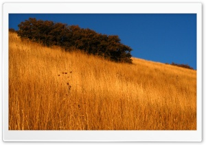 Fields of Gold HD Wide Wallpaper for Widescreen