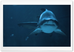Fierce Shark HD Wide Wallpaper for Widescreen