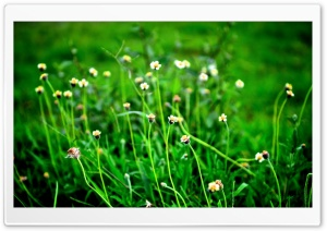 Fild Of Wildflowers HD Wide Wallpaper for Widescreen
