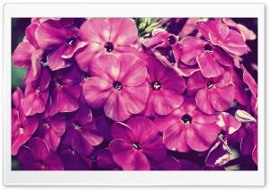 Fiore1 Ultra HD Wallpaper for 4K UHD Widescreen desktop, tablet & smartphone