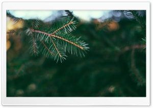 Fir Tree HD Wide Wallpaper for Widescreen