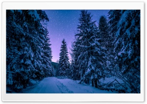 Fir Tree Forest, Snow, Winter, Night HD Wide Wallpaper for 4K UHD Widescreen desktop & smartphone