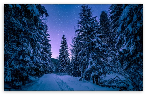 Fir Tree Forest, Snow, Winter, Night UltraHD Wallpaper for Wide 16:10 5:3 Widescreen WHXGA WQXGA WUXGA WXGA WGA ; UltraWide 21:9 24:10 ; 8K UHD TV 16:9 Ultra High Definition 2160p 1440p 1080p 900p 720p ; UHD 16:9 2160p 1440p 1080p 900p 720p ; Standard 4:3 5:4 3:2 Fullscreen UXGA XGA SVGA QSXGA SXGA DVGA HVGA HQVGA ( Apple PowerBook G4 iPhone 4 3G 3GS iPod Touch ) ; Smartphone 16:9 3:2 5:3 2160p 1440p 1080p 900p 720p DVGA HVGA HQVGA ( Apple PowerBook G4 iPhone 4 3G 3GS iPod Touch ) WGA ; Tablet 1:1 ; iPad 1/2/Mini ; Mobile 4:3 5:3 3:2 16:9 5:4 - UXGA XGA SVGA WGA DVGA HVGA HQVGA ( Apple PowerBook G4 iPhone 4 3G 3GS iPod Touch ) 2160p 1440p 1080p 900p 720p QSXGA SXGA ;