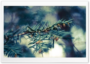 Fir Tree Twig HD Wide Wallpaper for Widescreen