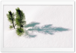 Fir Tree Twigs Above Snow HD Wide Wallpaper for 4K UHD Widescreen desktop & smartphone