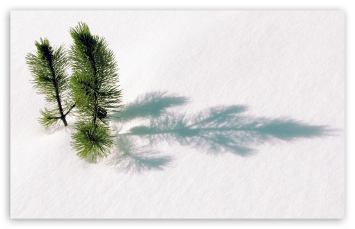 Fir Tree Twigs Above Snow HD wallpaper for Wide 16:10 5:3 Widescreen WHXGA WQXGA WUXGA WXGA WGA ; HD 16:9 High Definition WQHD QWXGA 1080p 900p 720p QHD nHD ; Standard 4:3 5:4 3:2 Fullscreen UXGA XGA SVGA QSXGA SXGA DVGA HVGA HQVGA devices ( Apple PowerBook G4 iPhone 4 3G 3GS iPod Touch ) ; Tablet 1:1 ; iPad 1/2/Mini ; Mobile 4:3 5:3 3:2 16:9 5:4 - UXGA XGA SVGA WGA DVGA HVGA HQVGA devices ( Apple PowerBook G4 iPhone 4 3G 3GS iPod Touch ) WQHD QWXGA 1080p 900p 720p QHD nHD QSXGA SXGA ; Dual 4:3 5:4 UXGA XGA SVGA QSXGA SXGA ;