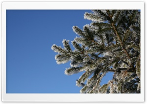 Fir Tree, Winter HD Wide Wallpaper for 4K UHD Widescreen desktop & smartphone