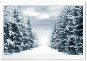 Fir Trees HD Wide Wallpaper for Widescreen