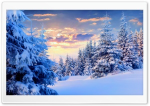 Fir Trees Under The Snow, Forest HD Wide Wallpaper for Widescreen
