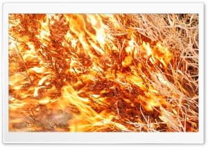 Fire Ultra HD Wallpaper for 4K UHD Widescreen desktop, tablet & smartphone