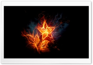 Fire Flower 1 HD Wide Wallpaper for Widescreen