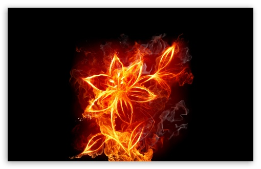 Fire Flowers HD wallpaper for Standard 4:3 5:4 Fullscreen UXGA XGA SVGA QSXGA SXGA ; Wide 16:10 5:3 Widescreen WHXGA WQXGA WUXGA WXGA WGA ; HD 16:9 High Definition WQHD QWXGA 1080p 900p 720p QHD nHD ; Other 3:2 DVGA HVGA HQVGA devices ( Apple PowerBook G4 iPhone 4 3G 3GS iPod Touch ) ; Mobile VGA WVGA iPhone iPad PSP Phone - VGA QVGA Smartphone ( PocketPC GPS iPod Zune BlackBerry HTC Samsung LG Nokia Eten Asus ) WVGA WQVGA Smartphone ( HTC Samsung Sony Ericsson LG Vertu MIO ) HVGA Smartphone ( Apple iPhone iPod BlackBerry HTC Samsung Nokia ) Sony PSP Zune HD Zen ; Tablet 2 ;