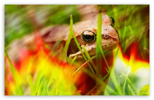 Fire Frog HD wallpaper for Wide 16:10 5:3 Widescreen WHXGA WQXGA WUXGA WXGA WGA ; HD 16:9 High Definition WQHD QWXGA 1080p 900p 720p QHD nHD ; UHD 16:9 WQHD QWXGA 1080p 900p 720p QHD nHD ; Standard 4:3 5:4 3:2 Fullscreen UXGA XGA SVGA QSXGA SXGA DVGA HVGA HQVGA devices ( Apple PowerBook G4 iPhone 4 3G 3GS iPod Touch ) ; iPad 1/2/Mini ; Mobile 4:3 5:3 3:2 16:9 5:4 - UXGA XGA SVGA WGA DVGA HVGA HQVGA devices ( Apple PowerBook G4 iPhone 4 3G 3GS iPod Touch ) WQHD QWXGA 1080p 900p 720p QHD nHD QSXGA SXGA ;