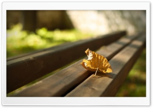 First Autumn Leaf HD Wide Wallpaper for Widescreen