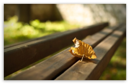 First Autumn Leaf ❤ 4K UHD Wallpaper for Wide 16:10 5:3 Widescreen WHXGA WQXGA WUXGA WXGA WGA ; 4K UHD 16:9 Ultra High Definition 2160p 1440p 1080p 900p 720p ; Standard 4:3 5:4 3:2 Fullscreen UXGA XGA SVGA QSXGA SXGA DVGA HVGA HQVGA ( Apple PowerBook G4 iPhone 4 3G 3GS iPod Touch ) ; Tablet 1:1 ; iPad 1/2/Mini ; Mobile 4:3 5:3 3:2 16:9 5:4 - UXGA XGA SVGA WGA DVGA HVGA HQVGA ( Apple PowerBook G4 iPhone 4 3G 3GS iPod Touch ) 2160p 1440p 1080p 900p 720p QSXGA SXGA ; Dual 16:10 5:3 16:9 4:3 5:4 WHXGA WQXGA WUXGA WXGA WGA 2160p 1440p 1080p 900p 720p UXGA XGA SVGA QSXGA SXGA ;