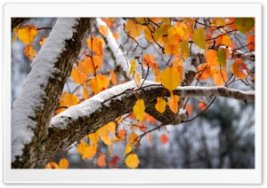 First Snow HDR HD Wide Wallpaper for Widescreen