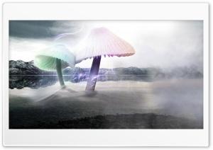 Fischfanger - Giant Mushrooms Ultra HD Wallpaper for 4K UHD Widescreen desktop, tablet & smartphone