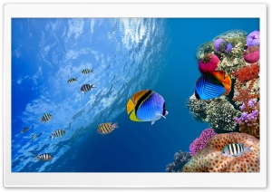 fish 3 Ultra HD Wallpaper for 4K UHD Widescreen desktop, tablet & smartphone